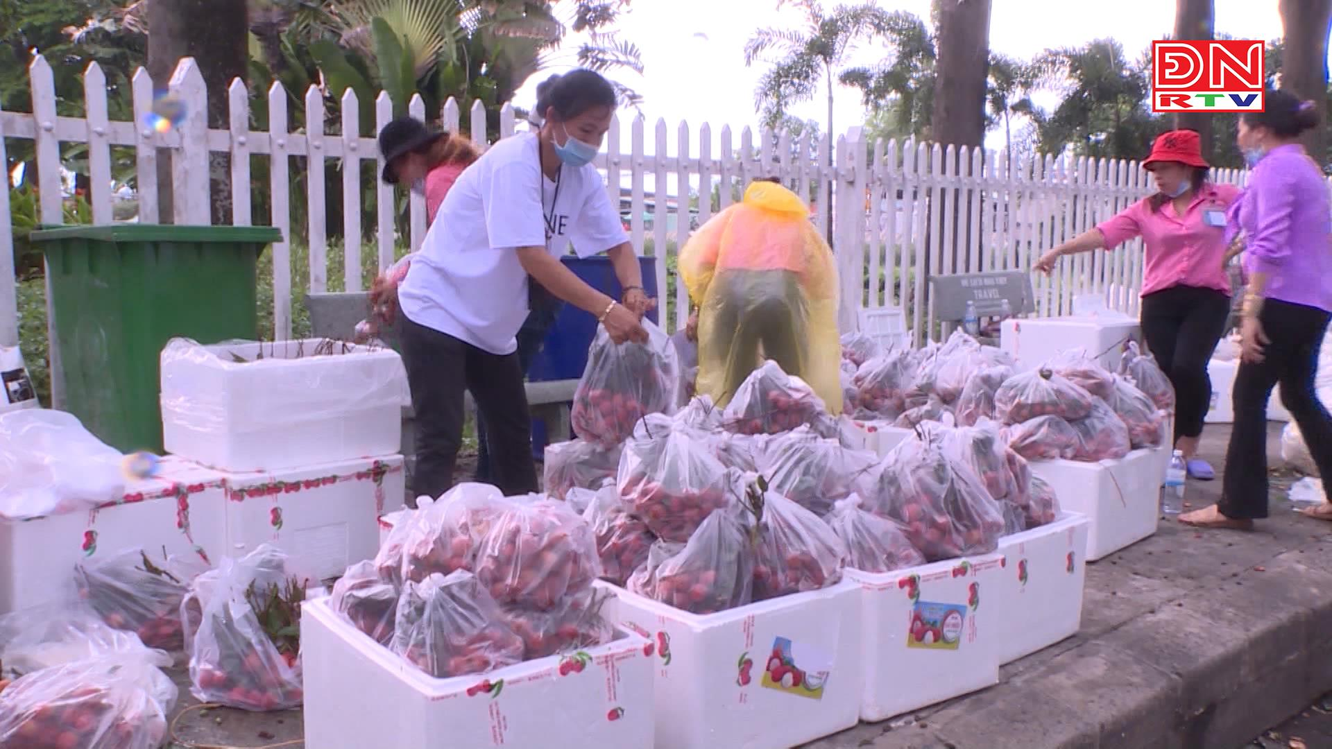 Doanh nghiệp đầu tiên của Đồng Nai hỗ trợ tiêu thụ hơn 17 tấn vải thiều